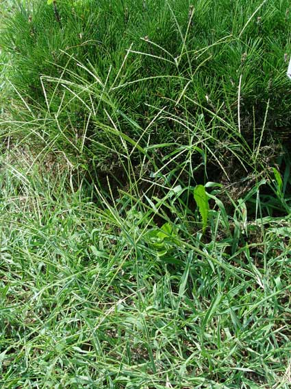Crabgrass Control And Spring Fertilization Greenview