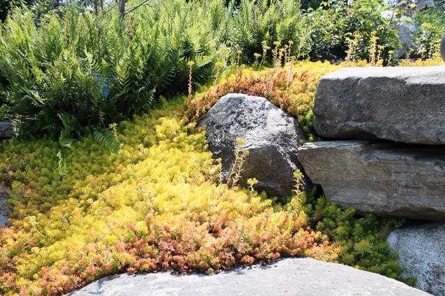 succulents great heat and drought tolerant beauties greenview fertilizer. Black Bedroom Furniture Sets. Home Design Ideas