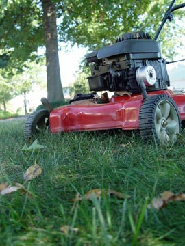 Grass cut closeup