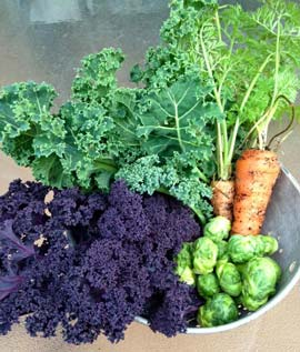 Fall vegetable harvest
