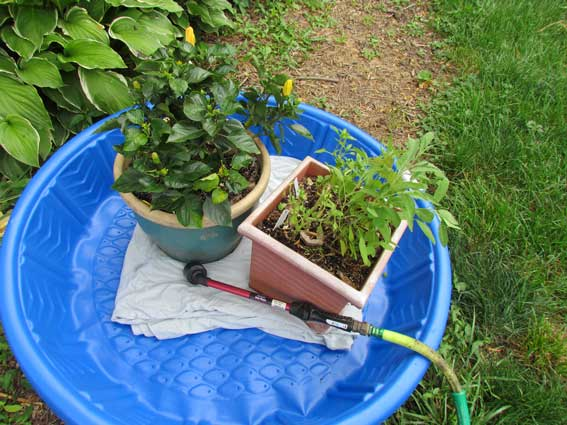 Nice Corral Pots Into A Kiddie Pool