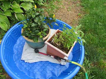 Corral pots into a kiddie pool