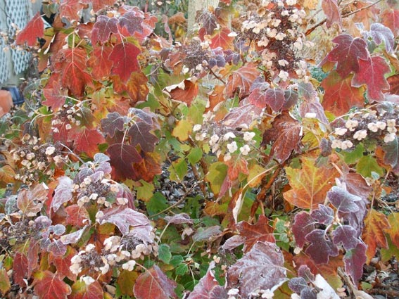 Small Can Be Beautiful Shrubs For Smaller Gardens Greenview