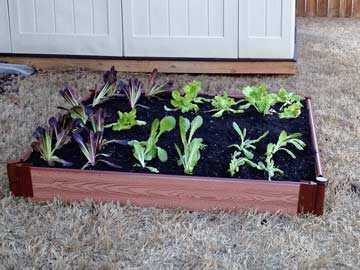 Simple store bought raised bed kit