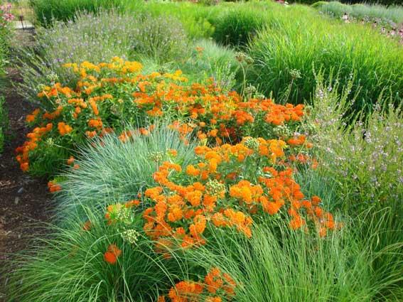 Three Drought Tolerant Plants For The Garden Greenview Fertilizer