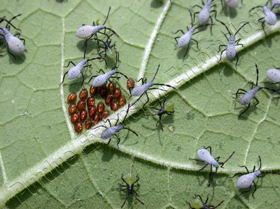 Garden Insects: Identifying the Good and Dealing with the