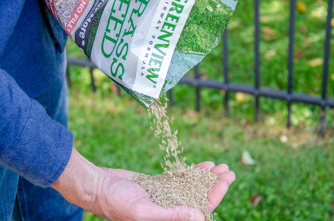 GreenView grass seed