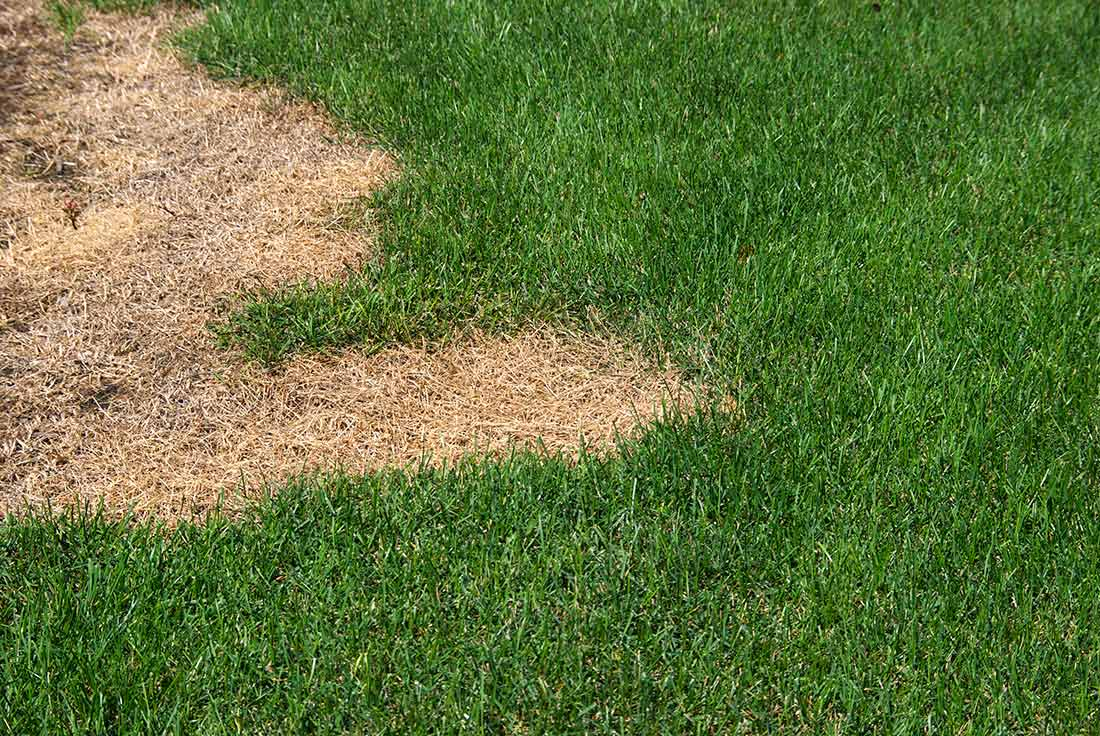 How To Fix Dead Patches And Fill Bare Spots In The Lawn