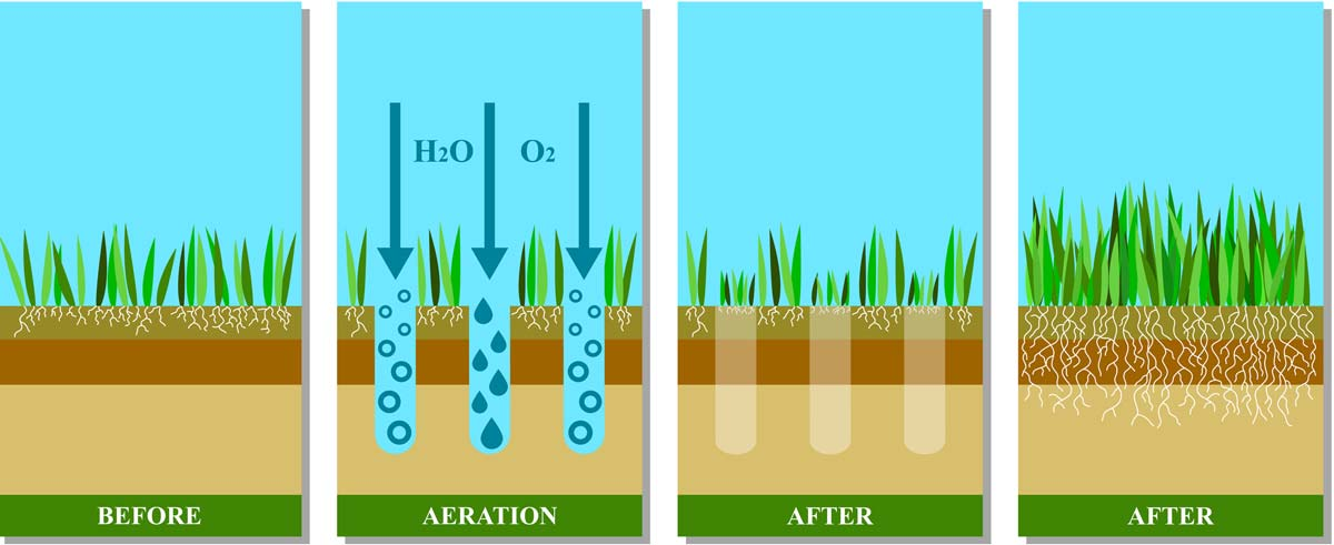 Lawn aeration effects