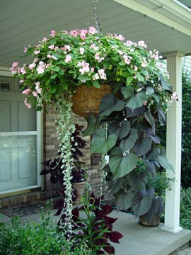 impatiens and sweet potato vine in basket