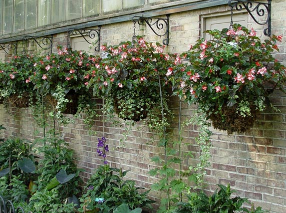 How To Grow Glorious Hanging Baskets Greenview Fertilizer