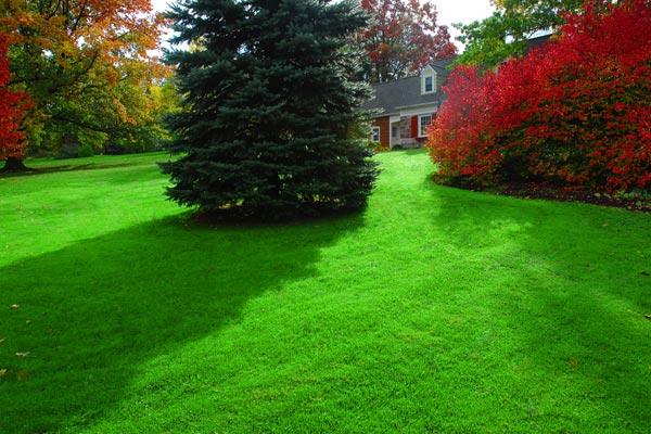 It S Time To Fertilize Your Lawn Greenview Fertilizer