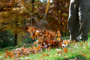 Rake up and discard or compost the initial heavy fall of leaves, since they can block air and light from getting to your lawn