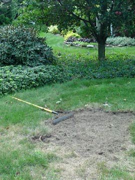 Repairing a dead patch in the lawn