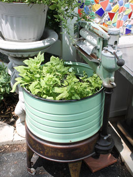 spinach in a washtub