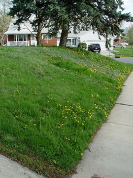 How To Get Your Weedy Lawn Back Under Control Greenview