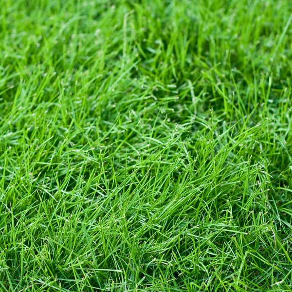 How To Choose The Right Grass Seed Greenview Fertilizer