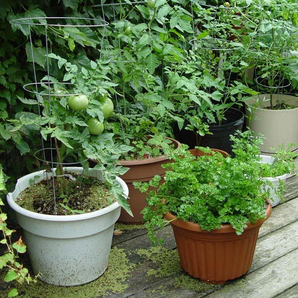 No Garden Needed: Growing Vegetables In Containers U2022 GreenView Fertilizer
