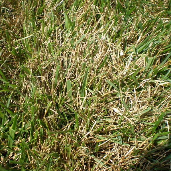 Tips And Advice For Lawn Pests Diseases Amp Other Lawn