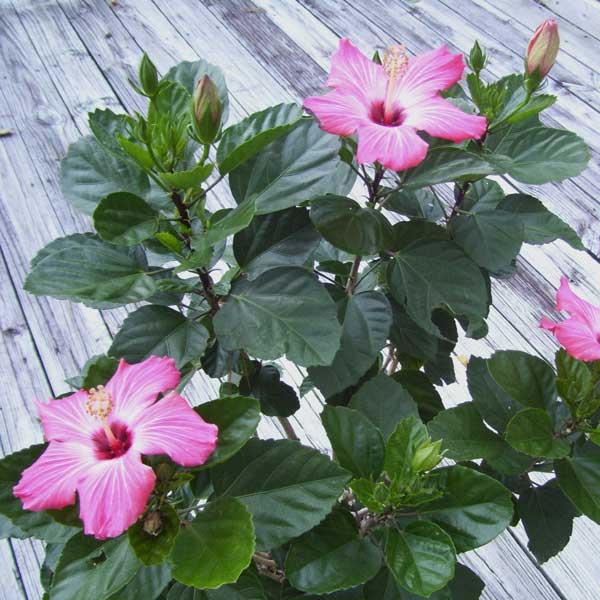 Bringing Tender Plants Inside For Winter Greenview