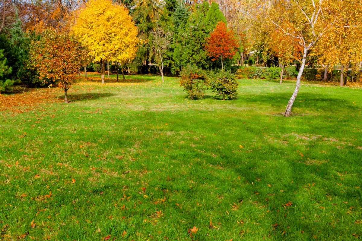 Fall cool-season lawn