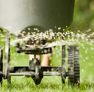 Spreading lime on a lawn